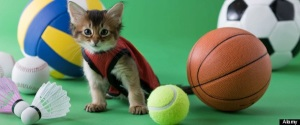 Somali Kitten and Sports